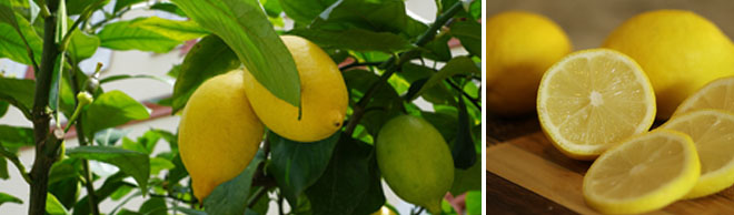 Lemon Header-Nov 29