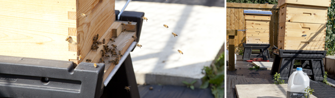 YEG Bees: Backyard Beekeeping in Edmonton