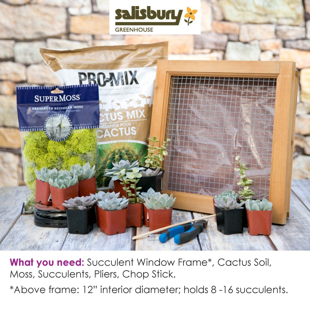 Succulent Window Frame How To Salisbury Greenhouse