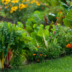 How To Have Less Lawn, and More Veggies