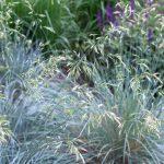 Low-Maintenance Planting