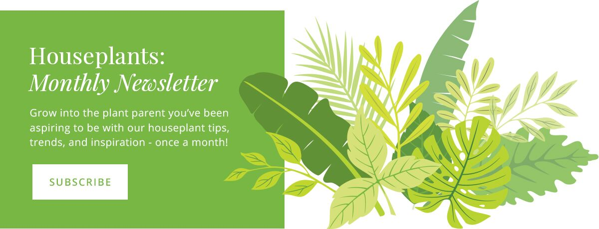houseplant newsletter click to subscribe