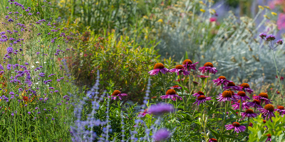 A Complete Guide In Demistifying Gardening Zones zone 3 perennials