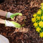 Fall Care Guide for Tender Perennials