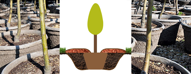 Tree Planting 101 - Salisbury Greenhouse