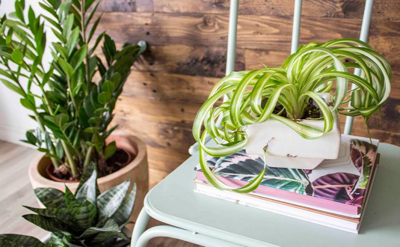 dayz plants 2 clutterbug