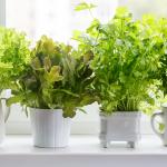 How To Grow The Best Indoor Herb Garden Ever