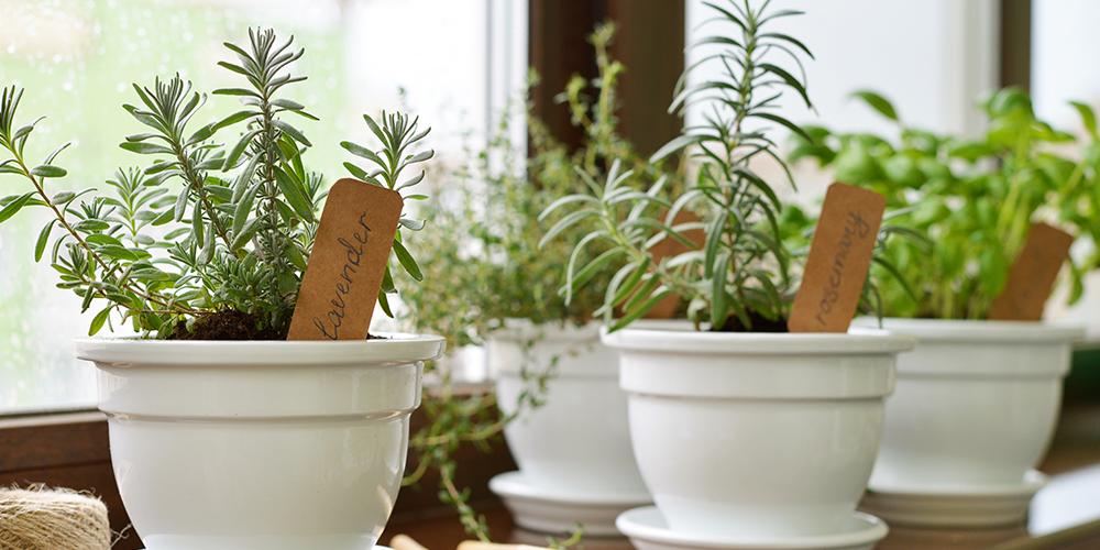how to grow the best indoor herb garden ever herb pots windowsill