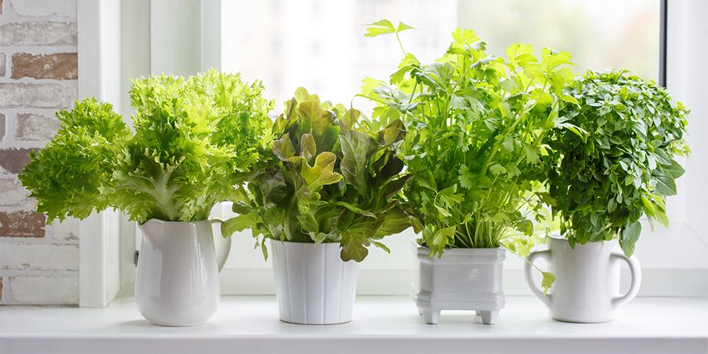 how to grow the best indoor herb garden ever main