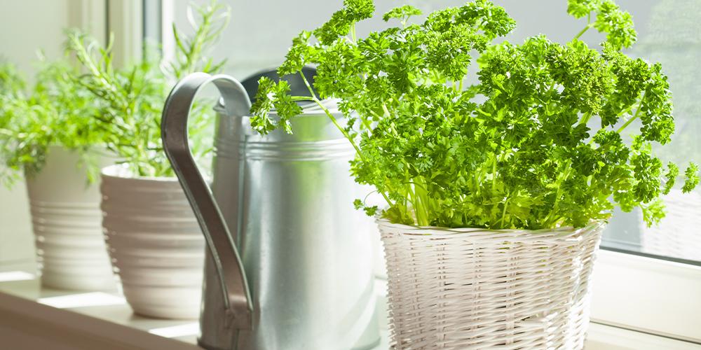 how to grow the best indoor herb garden ever windowsill herbs