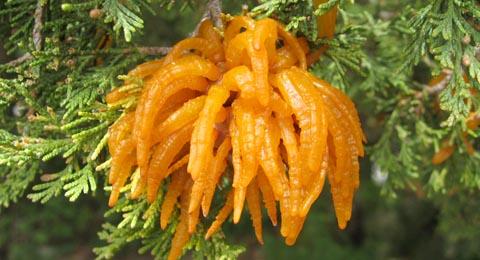 Orange Fungi On Trees
