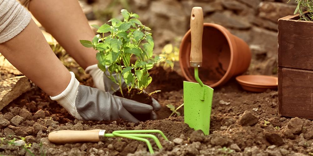 Second Year Gardening Tips   Salisbury Greenhouse