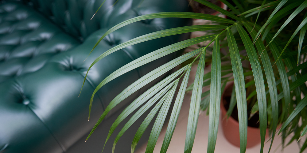 the 3 best tropical palms to cure the winter blues main