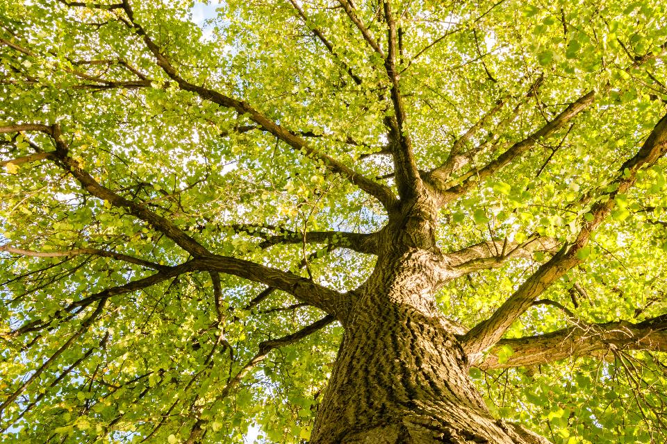 The Benefits of Big Trees - Salisbury Greenhouse