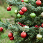 The Legends Behind Popular Christmas Plants