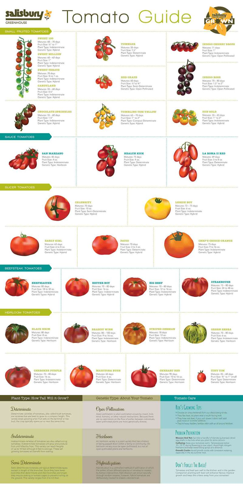 different tomato plants
