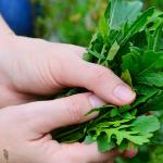 Top 7 Cool Season Vegetables and Herbs