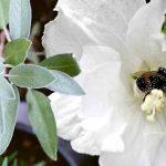 Best Perennials for Pollinators