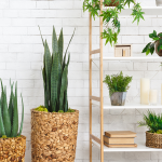 Top 5 Plant Styling Trends