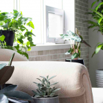 Plant Therapy and Seasonal Affective Disorder