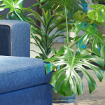 Monstera: How To Care For The Trendiest Plant Of 2019